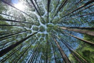 Höhenansicht verschiedener Bäume; dahinter blauer Himmel und Sonne.