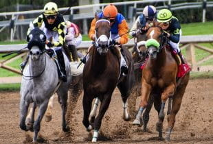Mehrere Pferde und Reiter im Rennen auf Rennbahn.