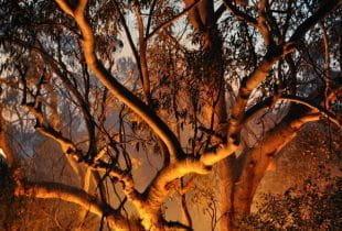 Bäume inmitten eines Buschfeuers im roten Schein.