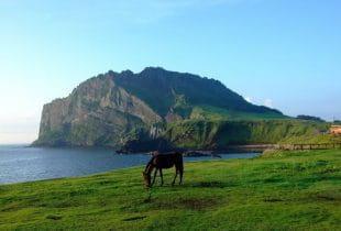 Küstenabschnitt der südkoreanischen Insel Jeju.