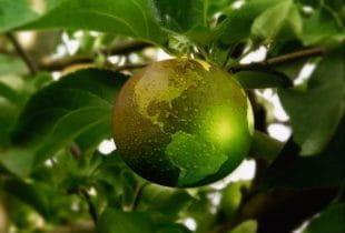 Grüner Apfel als Erdball an einem Ast mit grünen Blättern hängend.